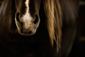 Wild Horse Auction Horse