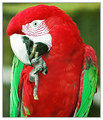 A beautiful Parrot