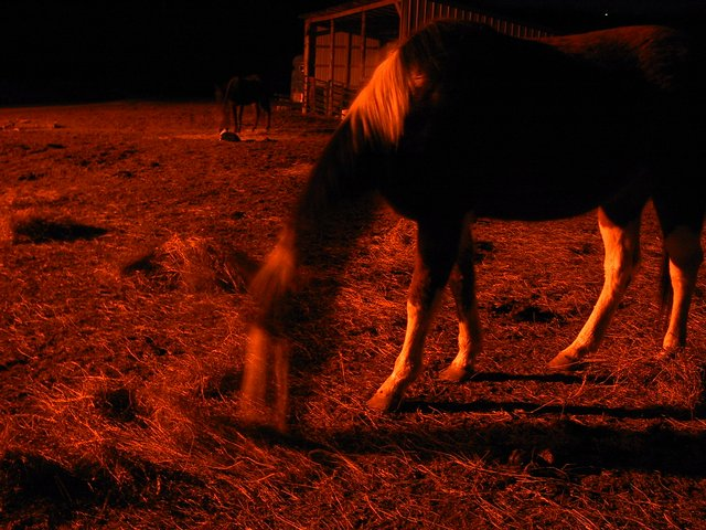 Ghost Horse of Mars