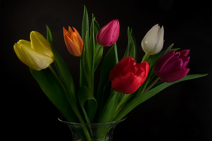 A tulip for every year