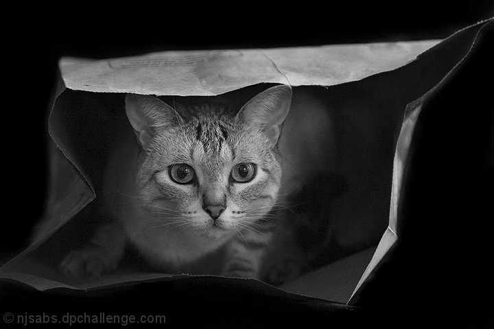 Hush.....Don't Let The Cat Out of the Bag