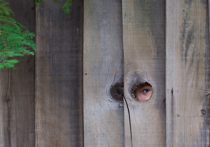Peek-a-Boo Neighbor