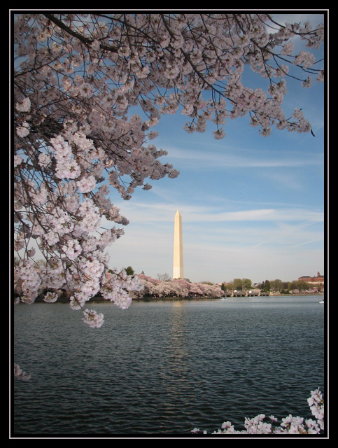 Washington in the Spring