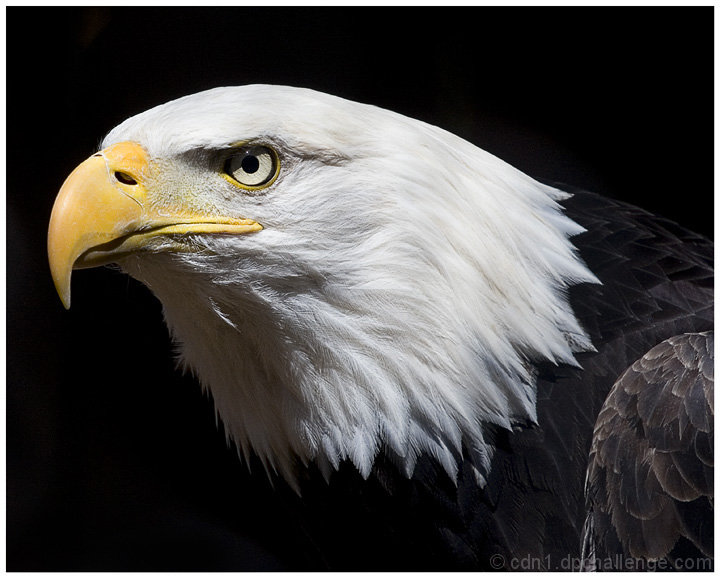 Eagle Eye Dpchallenge Jpg 720x578 Eagle Eye