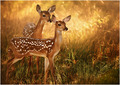 The Fawns of Dawn
