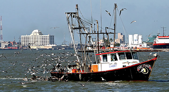 Shrimp Boat with Birds
