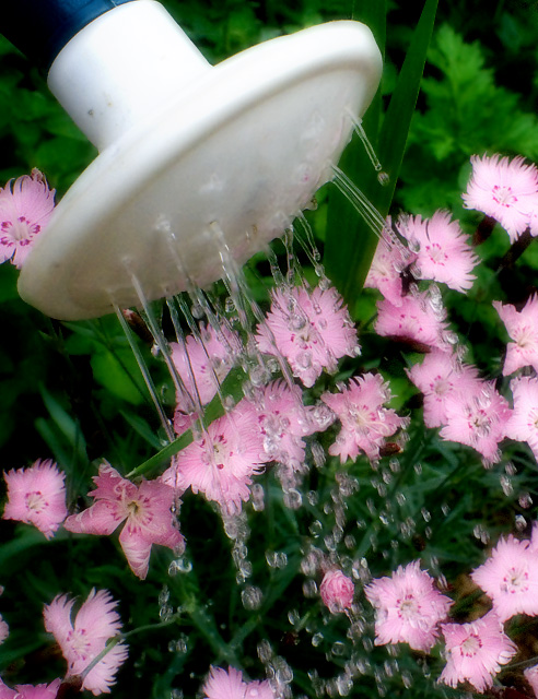 Cycles - Water To Flowers To Air To Water To Flowers