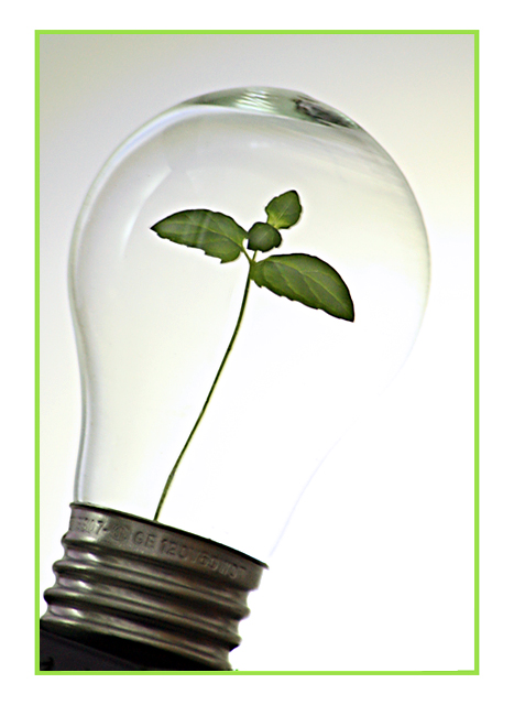 Green ideas for a brighter tomorrow