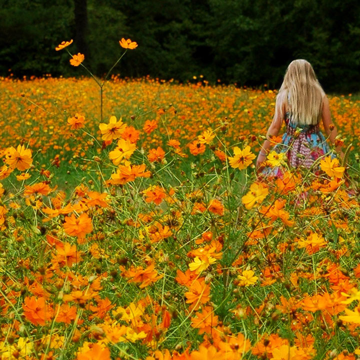 Y is for Yellow  Orange Wildflowers