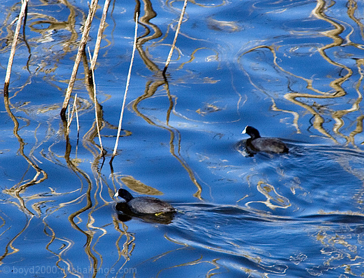 Coots in the Abstract