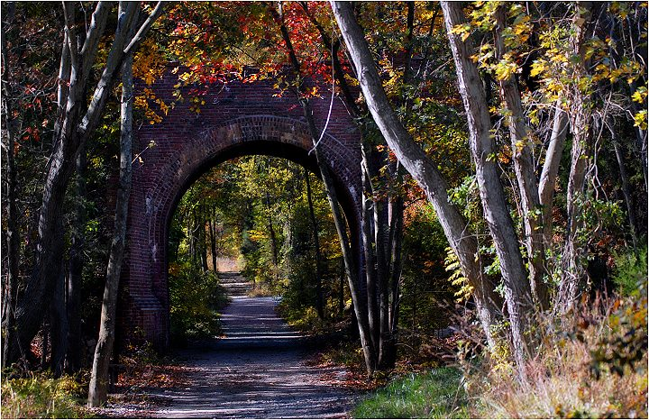 An Arch in the Forest