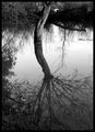 Arboreal Reflection