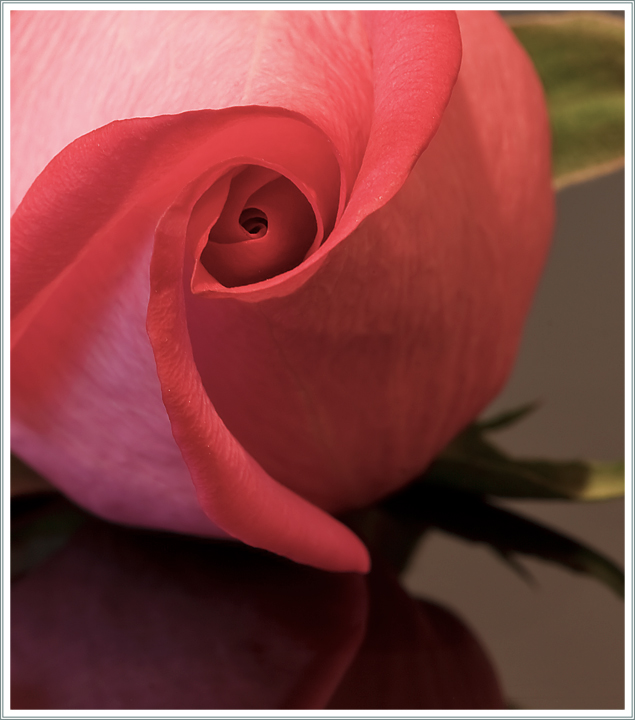 February - Valentine's Day (Aperture Rose) DPC Calendar - Photography Terms in Nature