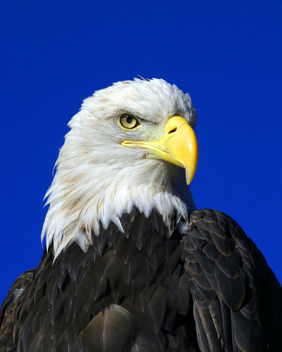 Our national symbol