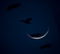 geese flying through the moon