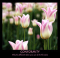 Conformity: Why be different when you can all be the same