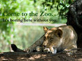 Come to The Zoo