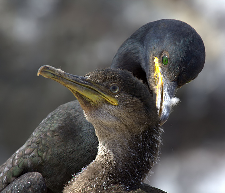 Mother and Baby Shag