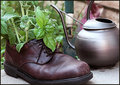 Herbs in an old shoe