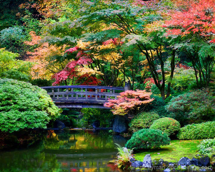 Japanese Autumn Garden