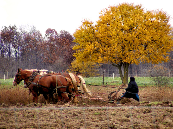 Fall Plowing