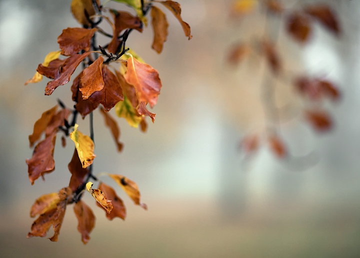 Bokeh, Rule of Thirds, Shallow DOF
