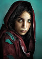 Tribute to Steve McCurry