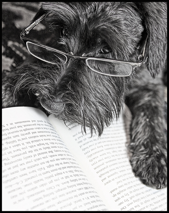 Yes, I'm reading.  You wanted something...?