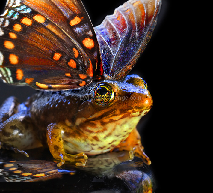 Flying Frogs:  Fact or Fiction?