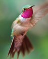DOF=1/2 a Hummingbird Head