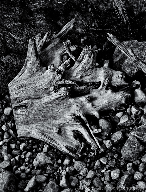 Driftwood and Stones, 2011