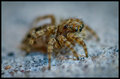 The Eyes of Salticidae