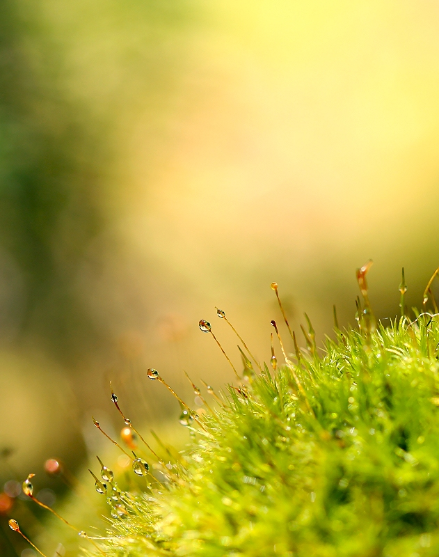 Mossy Macro World