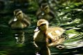 The Early [duckling] Catches the Worm