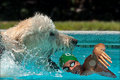 Champion swimmer fetched by giant mutant Labradoodle!