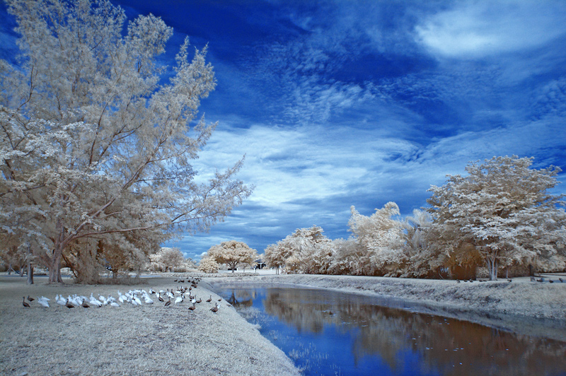 Sunday Gathering  - IR photography - DPC Tutorial by Judi