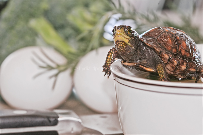 """Wait... you're making TURTLE soup??!"""