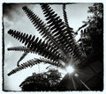 Fern Capital of the World
