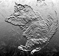 ...as if graven in bas relief upon the white surface, the figure of a gigantic cat...The Black Cat