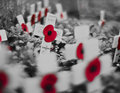 Every Poppy Has A Soul