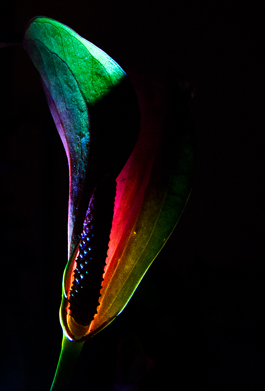 Colors in the dark