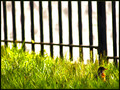The Robin and the Fence
