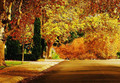 Fall in love with this street