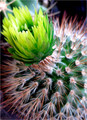 Green and Prickly