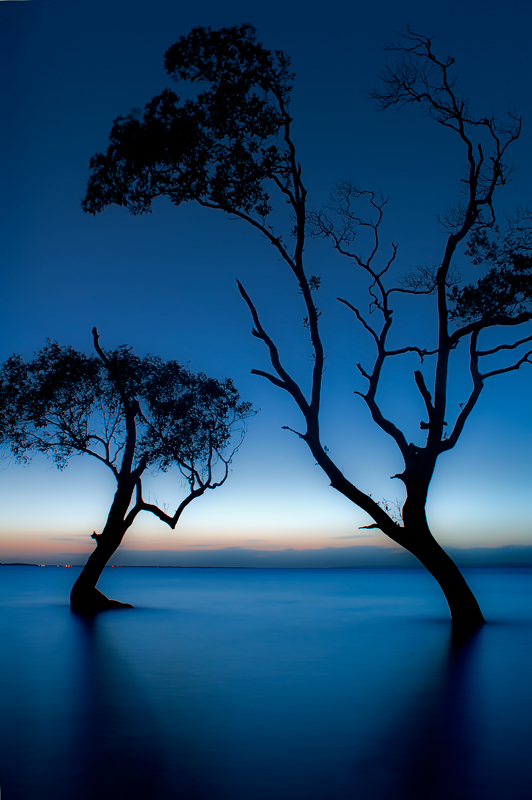 Dancing Mangrove Trees