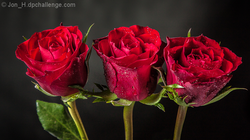 3 Red Roses for Sherpet