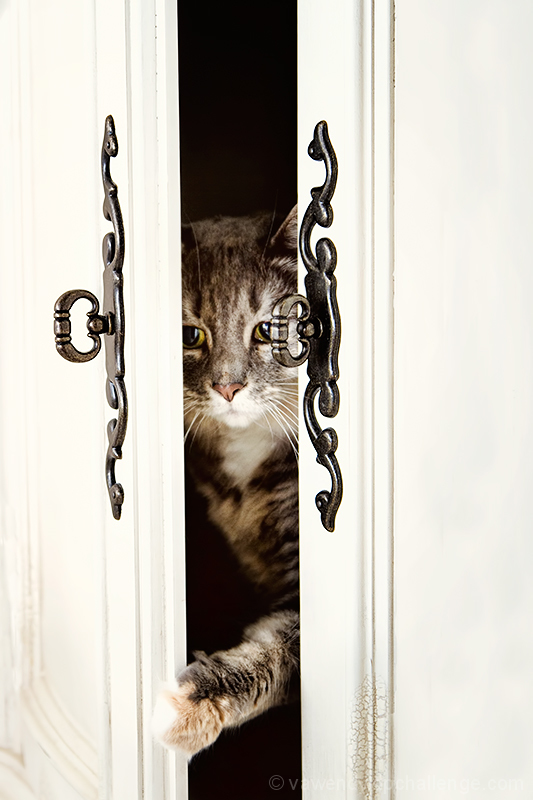 The Cat's in the Cupboard