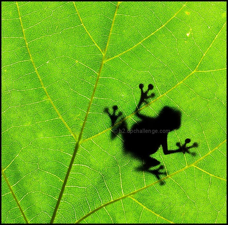 Leaf my tree, frog!