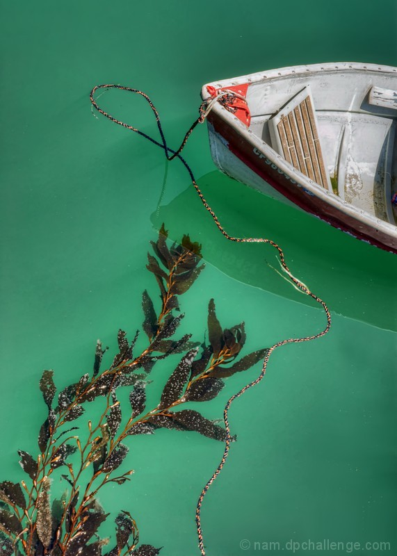 Moored Boat and Kelp
