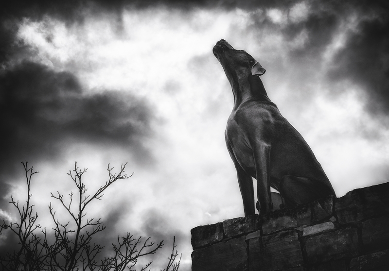 The Howling Hound